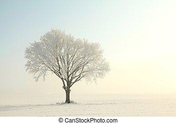 albero quercia, su, uno, soleggiato, inverno, mattina