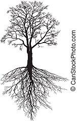 albero, radici, noce