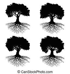 albero, radici