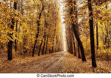 albero-rigato, viale, in, autunno