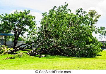 albero rotto