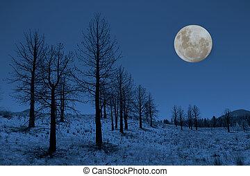 albero, sierre, luna