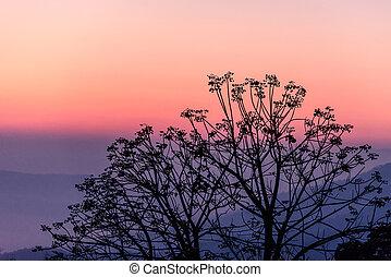albero, silhouette, alba