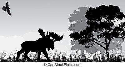 albero, silhouette, alce