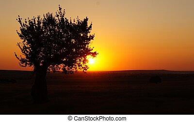 albero, silhouette, campo tramonto