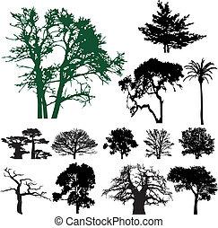 albero, silhouette, collezione