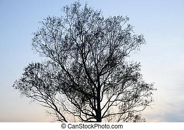 albero, silhouette, contro, sunset.