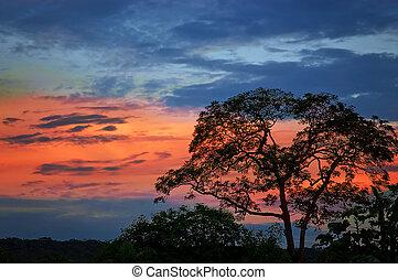 albero, silhouette, crepuscolo