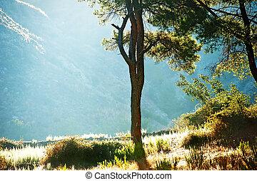 albero, silhouette, do, contro