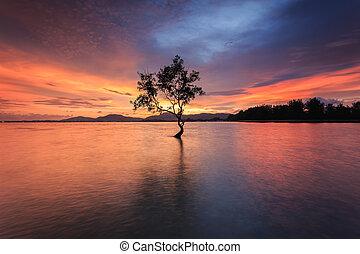 albero, silhouette, mare, sutset, tempo