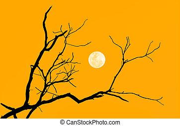 albero, silhouette, ramo