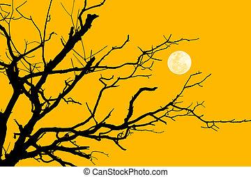 albero, silhouette, ramo, luna