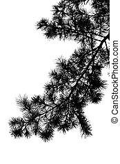 albero, silhouette, ramo, pino