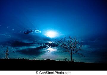albero, silhouette, tramonto
