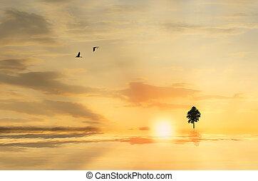 albero, silhouette, tramonto, contro