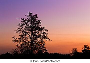 albero, silhouette, tramonto, grande