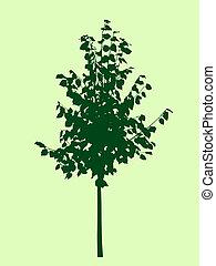 albero, silhouette.