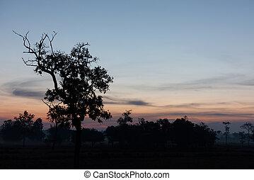 albero, sky., silhouette, crepuscolo