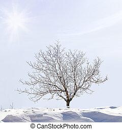 albero, slop, neve coprì