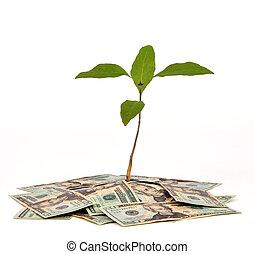 albero soldi