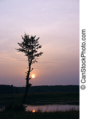 albero, sole, silhouette, contro, venuta