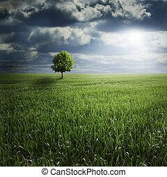 albero, solo, tempesta, campo