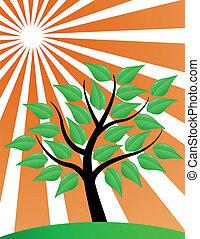 albero, stilizzato, con, rosso, sunburst