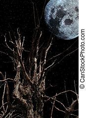 albero, strisciante
