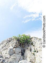 albero, su, cielo blu, fondo