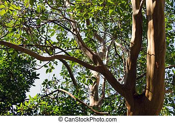 albero, su, cielo, fondo