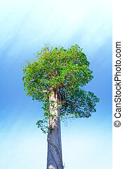 albero, su, cielo, fondo.