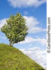 albero, su, collina, con, cielo, fondo.