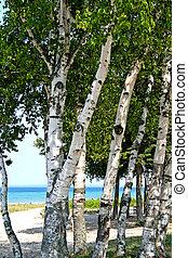 albero, su, riva lago
