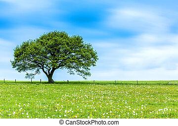albero, su, uno, prato, con, nubi