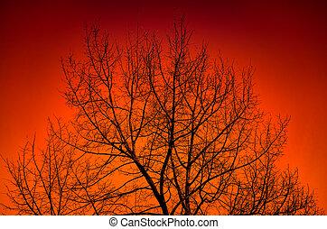 albero, sunset., silhouette, contro, grande
