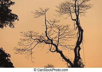 albero, tramonto, in, natura