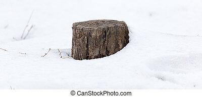 albero, vecchio, ceppo, inverno, neve
