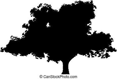 albero, (vector)