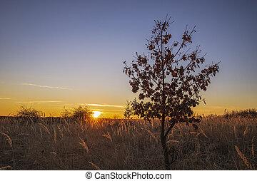 albero, vegetazione, campo tramonto, bello