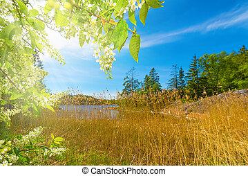 Blu albero rowan cielo bacche cielo blu albero for Albero con fiori blu