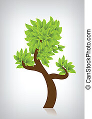 albero verde, leafage