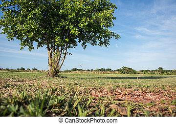 albero verde, su, cielo blu, fondo