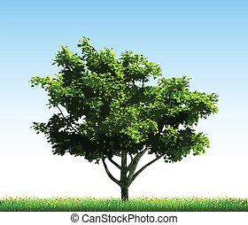 albero verde, su, grass., vettore