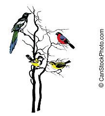 albero, vettore, silhouette, uccelli