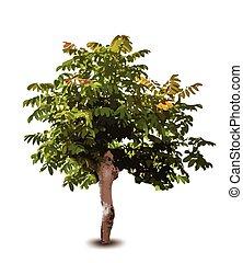 albero., vettore, verde