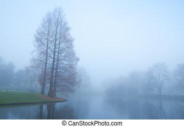 albero, vicino, lago, in, nebbia, durante, autunno