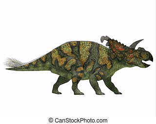 Albertaceratops on White