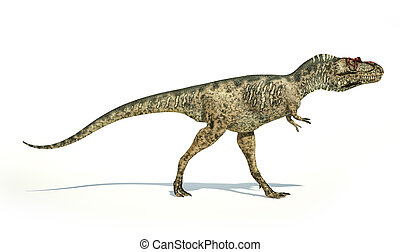 Albertosaurus Dinosaur, photorealistic and scientifically correct representation, side view. On white background with drop shadow. Clipping path included.
