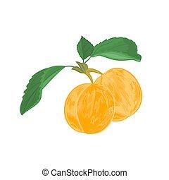 albicocche, foglie, dessert frutta