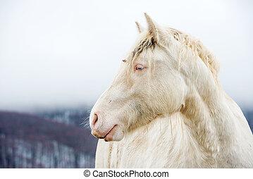 albino, cavallo, con, occhi, blu, su, il, neve